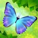 彩翼蝴蝶保护区ios版